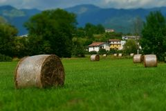 Round hay bales in the green field royalty free stock photos