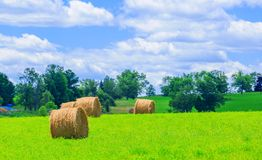 Round hay bales on the green field Stock Photography