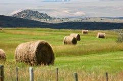 Round hay bales in green pasture of Wyoming Stock Photo