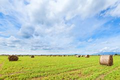 Hay bales in a summer field. Rural landscape. Royalty Free Stock Photography