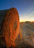Round hay bales Stock Image