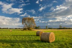 Free Round Hay Bales In The Meadow, Tree And Clouds In The Sky Royalty Free Stock Photos - 153686658