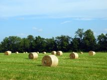 Round hay bales just off the baler in a country field. Round balers have become quite popular, as much more hay can be put into a round bale, upwards of 1,000 stock photography
