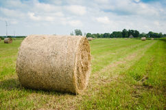 Round hay bales on meadow Royalty Free Stock Photos