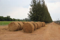 Round Hay Bales in the Meadow Stock Photo