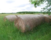 Round Hay Bales. In a meadow in summer Royalty Free Stock Photography