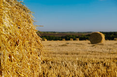Round hay bales in a newly mowed field Stock Image