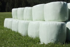 Round hay bales. In plastic wrap cover Royalty Free Stock Image