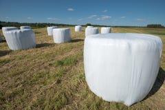 Round hay bales Royalty Free Stock Photo