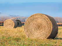 Round Hay Bales Stock Photos