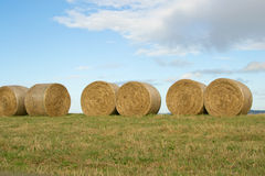 Hay Round Bales Stock Images