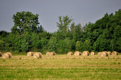 Round Hay Bales. Round bales of hay sit in a farm field stock images