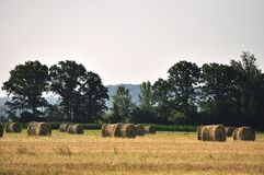 Round Hay Bales. Round bales of hay sit in a farm field royalty free stock photos