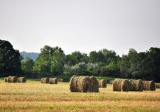 Round Hay Bales. Round bales of hay sit in a farm field stock image