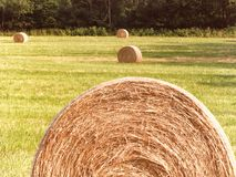 Round hay bales sit in newly cut hay field in FingerLakes NYS. Round balers have become quite popular, as much more hay can be put into a round bale, upwards of stock photo