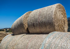 Round hay bales. Stacked in field Royalty Free Stock Images