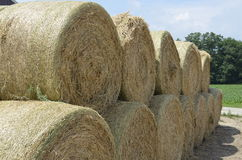 Round hay bales stacked ready Royalty Free Stock Photography