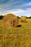 Round hay bales in the sun Stock Images