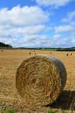 Round hay bales on a Sussex farm. Royalty Free Stock Photo