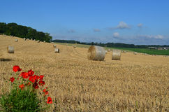 Round hay bales on a Sussex farm. Stock Photography