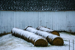 Round Hay Bales by White Barn. Round hay bales with snow in front of a black and white barn Royalty Free Stock Images