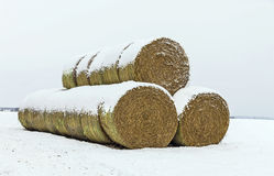Round Hay Bales in Winter Snow Stock Photography
