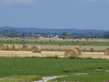 Round hay field Royalty Free Stock Image