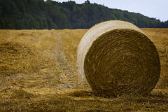A round haystack against the blue sky on a field Stock Photos