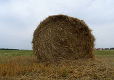 Round haystack on the farm field after harvesting stock image Stock Photography