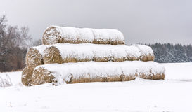 Round haystacks, covered with snow. Stock Image