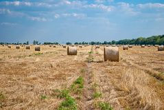 Round haystacks on a field of straw, on a sunny summer day, against a background of sky and trees stock photography