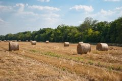 Round haystacks on a field of straw, on a sunny summer day, against a background of sky and trees Stock Image