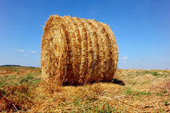 Round haystacks lie on the field on a sunny day. Royalty Free Stock Photos