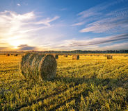 Round Haystacks Of Hay In The Farm Field Royalty Free Stock Photography