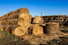 Round haystacks of straw Royalty Free Stock Photography