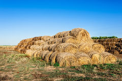 Round haystacks of straw Stock Image