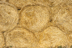 Round haystacks of straw Royalty Free Stock Image
