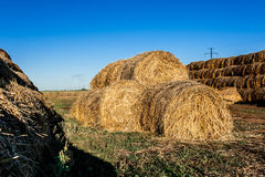 Round haystacks of straw Stock Images
