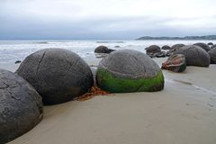 Moeraki Boulders on Koehohe beach in New Zealand. Round highly spherical boulders on the shores of the Tasman sea in the South island of New Zealand. They can be stock photography