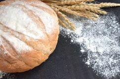 Round homemade bread with wheat ears and scattered flour on black background. Selective focus royalty free stock photos