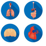 Round icons of internal human organs Flat design Stock Photos