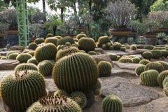 Round kaktusy zdjęcia royalty free