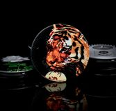 Round kickstand with tiger head on black background. Round kickstand for smartphone with pictures on them. They are telescopic and pop twice. When opened you can stock images