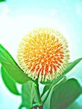 Round kwiat Obrazy Royalty Free