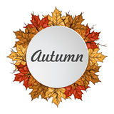 Round label with autumn maple leaves. Autumn frame. Stock Photos