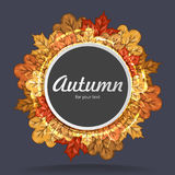 Round label with autumn maple leaves. Autumn frame. Royalty Free Stock Image