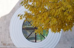 Round large window and a tree branch with yellow leaves. stock photos