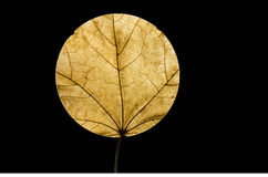 Round leaf Stock Photos