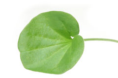 Round leaf Royalty Free Stock Images