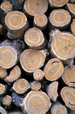 Round Logs Background Stock Photo